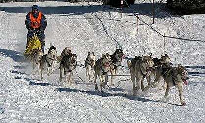 dog-leads-snow